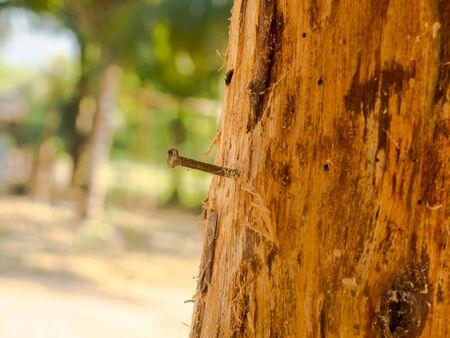 clavados: La adherencia fue clavado en los árboles.