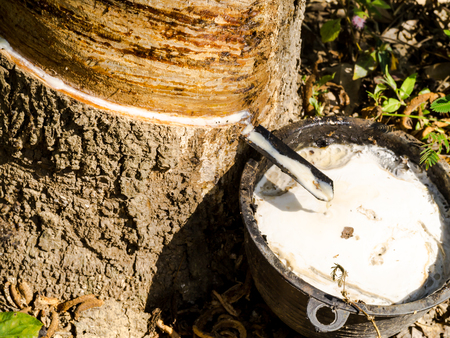 rubber: Rubber tapping.