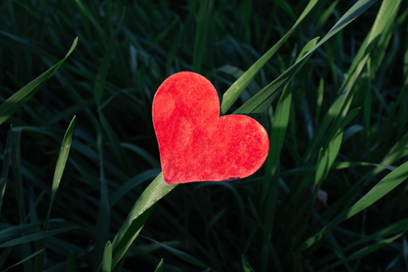 Valentines Day background with heart in ray of sunshine and fresh grass garden