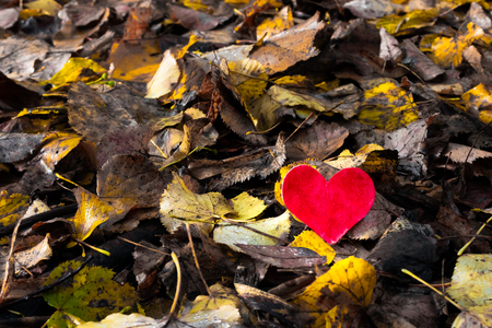 Valentines Day background with heart and old yellow autumn leaves with copy space
