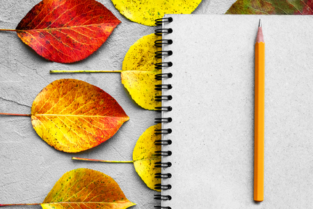 School notebook, pencil and autumn color leaves. Back to school concept. Creative flat lay leaves with copy space