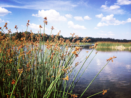 beautiful lake with a reed bush and clouds in the blue sky Stok Fotoğraf