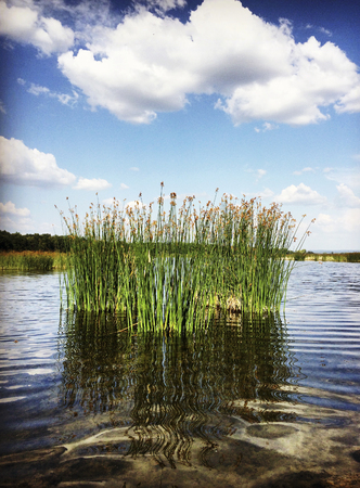 beautiful lake with an island of reed bush and clouds in the blue sky