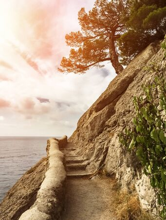 lonely pine tree on the edge of a steep cliff with a stone mountain path against the sea with a sunset, black sea, golitsyn trail in the Crimea Stock Photo