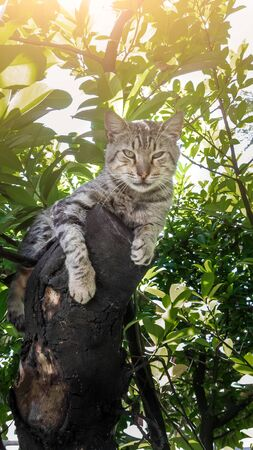 the cat lies on a large tree branch on a hot summer day under the shade of foliage and looks at the camera, a wild gray cat is resting on a tree, close-up portrait Фото со стока