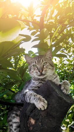 cat lies on a large tree branch on a hot summer day under the shade of foliage and looks at the camera, a wild gray cat is resting on a tree, close-up portrait
