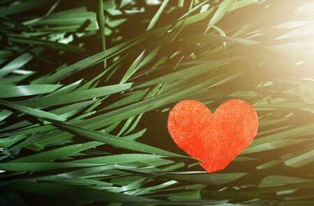 Valentine's Day paper red heart on fresh grass garden in sunset,in sun glare, health and cardio concept