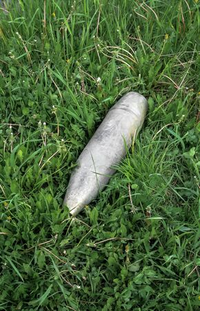 Unexploded new, shiny artillery shell on green grass. View from above. Peace and war. Top view 免版税图像