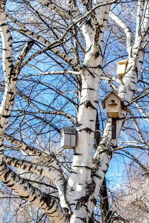 Wooden birdhouses on a birch in early sunny spring against the blue sky in Russia