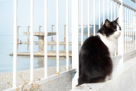 black and white cat on the white embankment of the sea sits by the fence. Fluffy cat sailor
