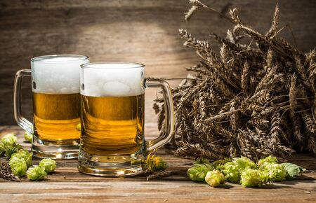 tankard: Two mugs of beer on table with hop and wheat in empty wooden background