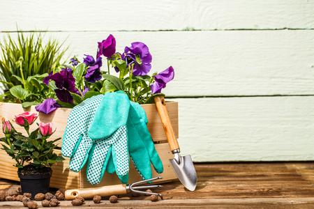 Tuingereedschap en bloemen Stockfoto