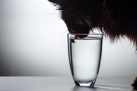 Cat drinks water from glass Stock Photo