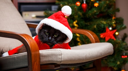 New Years photo of black cat in Santa costume