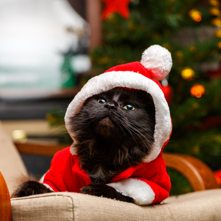 Picture of festive cat in santa costume looking up Stock Photo
