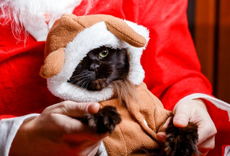 Picture of New Years black cat in deer suit