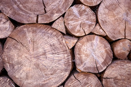 Photo of felled round logs Imagens