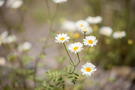 Photo of daisies in forest