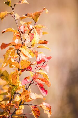 Photo of autumn leaves on blurred in autumn garden