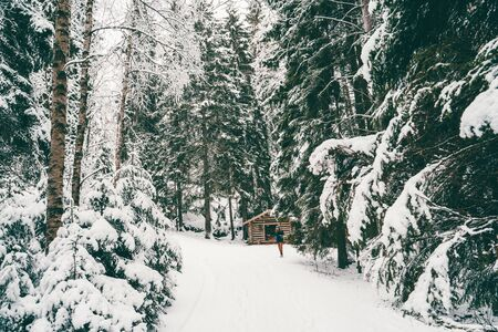 Photo from afar of man tourist walking in winter forest