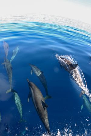 Een school van dolfijnen Stockfoto
