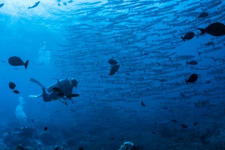 Volg een school vissen Stockfoto
