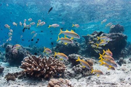 Oceanische vis