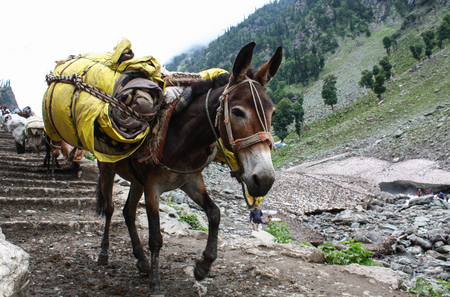 Ezel met zware benodigdheden en bagage op de berg Stockfoto