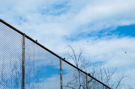 The doves are on the steel mesh fence. Stock Photo