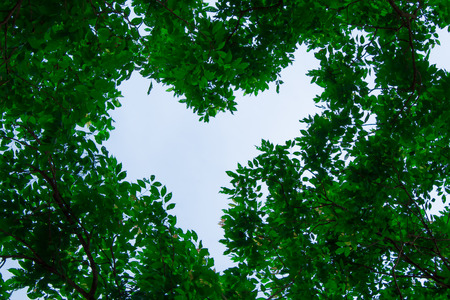 La natura del cielo e degli alberi sono bellissimi, con l'albero intorno per vedere il cielo a forma di cuore.