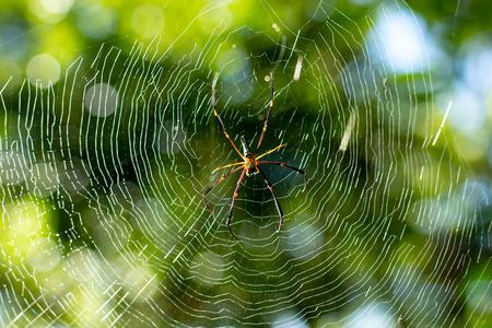 Spider on cobweb in gareden. Banque d'images - 104234353