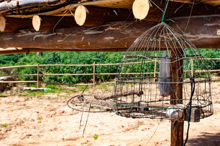 Cage piège les oiseaux suspendus dans le sous-sol. Banque d'images