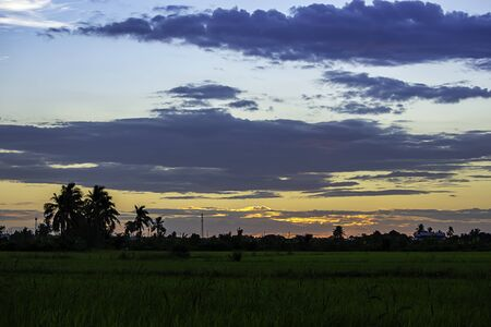 Evening sunset light is orange after the telephone receiver antenna. and  trees In the rice paddies. Stock Photo