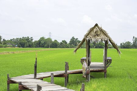 The huts built from wood and dry leaves with a wooden bridge on the rice fields
