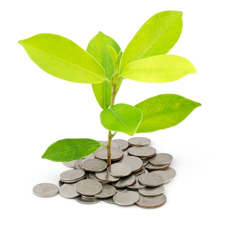 Money Tree on a pile of coins Isolated on white background photo