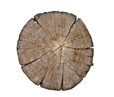cut section of wood stump Stock Photo - 11430299