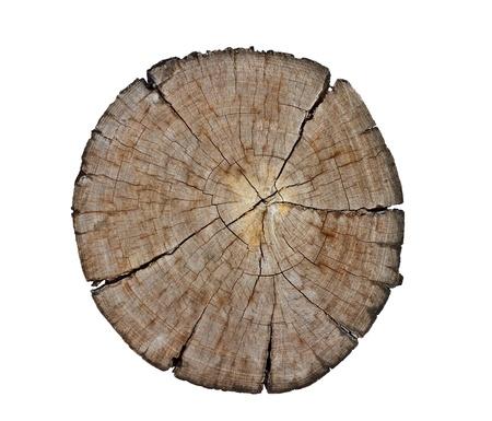 dead wood: cut section of wood stump