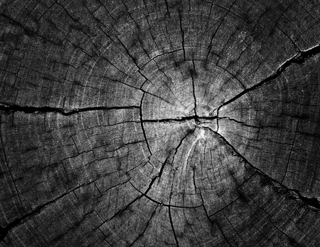 cut section of wood stump, black & white photo
