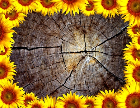 cut section of wood stump decorated with sunflowers photo
