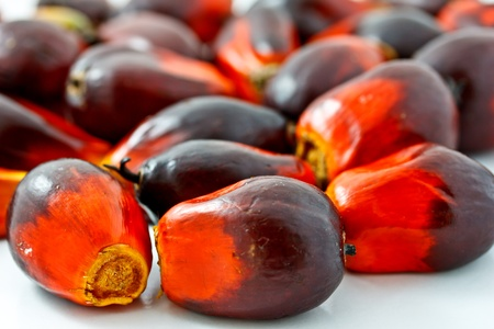 group of palm oil fruits Stock Photo