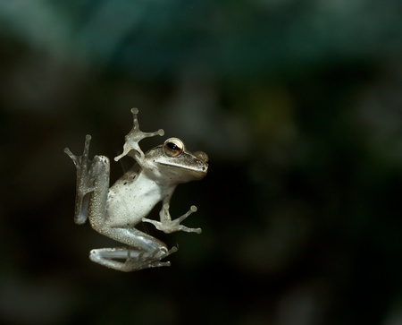 frog jump: leap frog on glass window