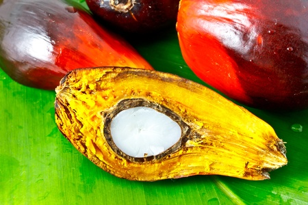 red palm oil: oil palm fruits on green leaf Stock Photo