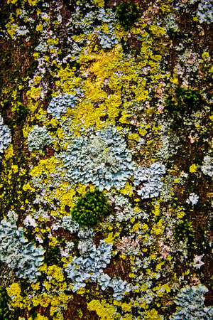 baclground: moss on tree for baclground