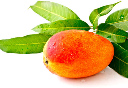 mango on white background photo