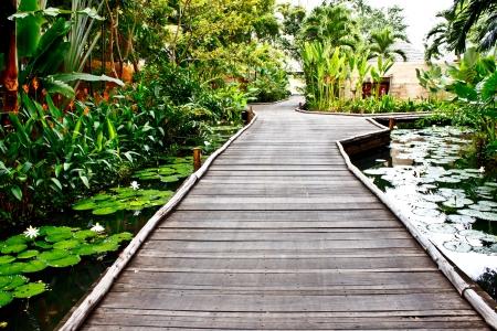 walkway in a tropical garden