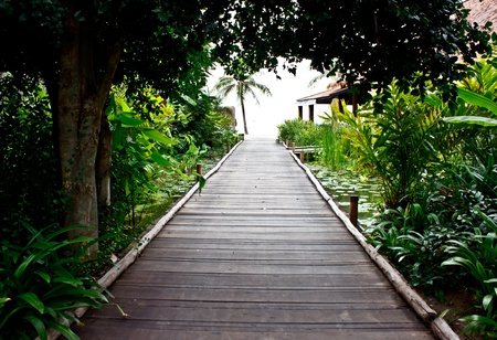 walkway in a tropical garden photo