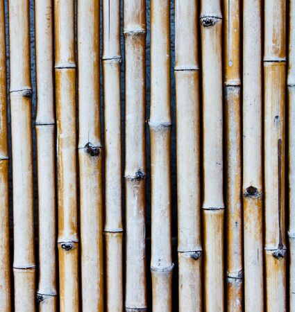 old bamboo wall photo