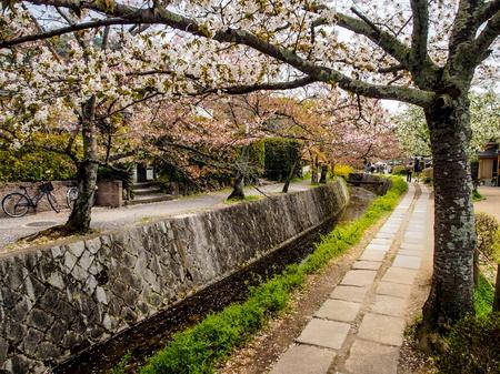 philosophers: Sakura at Philosopher s path in Kyoto, Japan