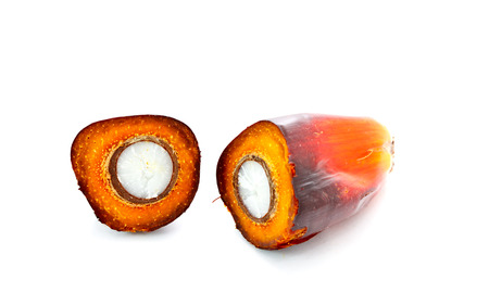 cut oil palm fruit on white  photo