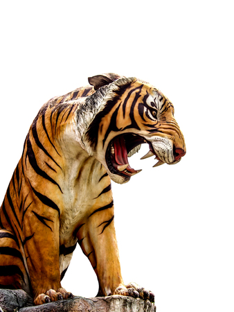 roaring tiger: isolated tiger image on white background